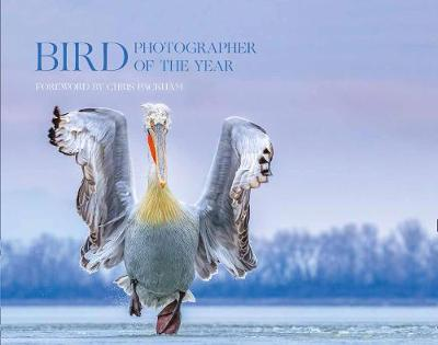 Picture of Bird Photographer of the Year : Collection 4
