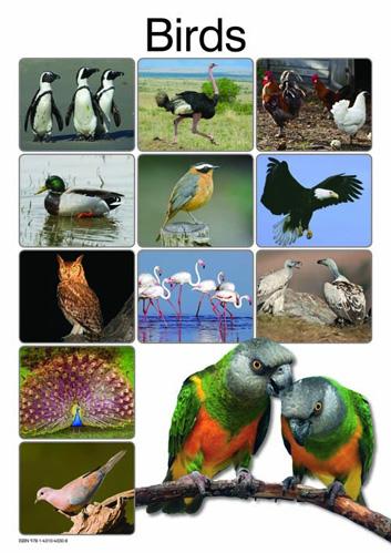 Birds: Grade R: Poster