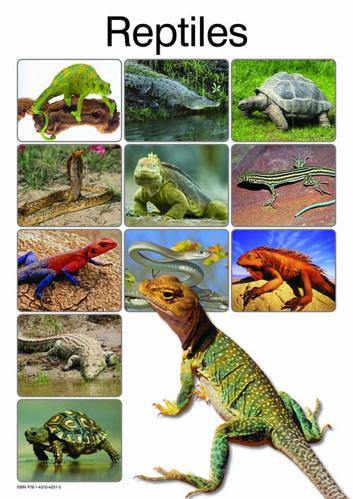 Reptiles: Grade R: Poster