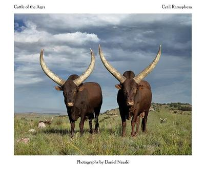 Picture of Cattle of the ages