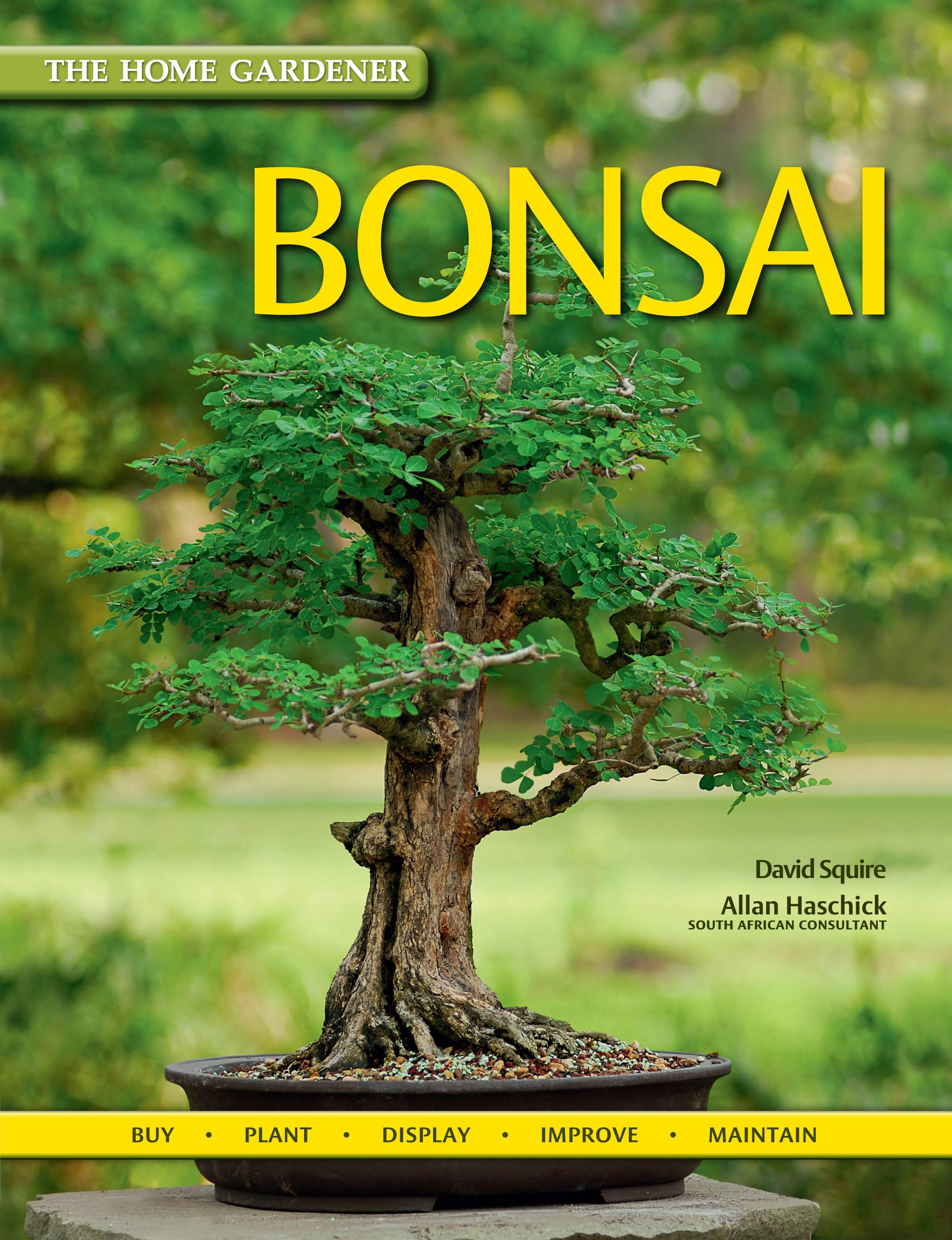 Picture of Bonsai