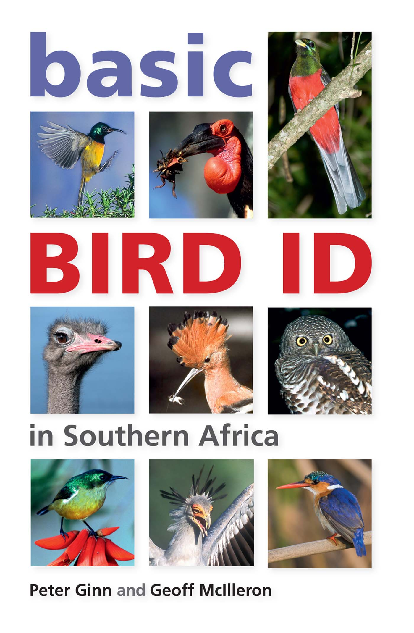 Picture of Basic Bird ID