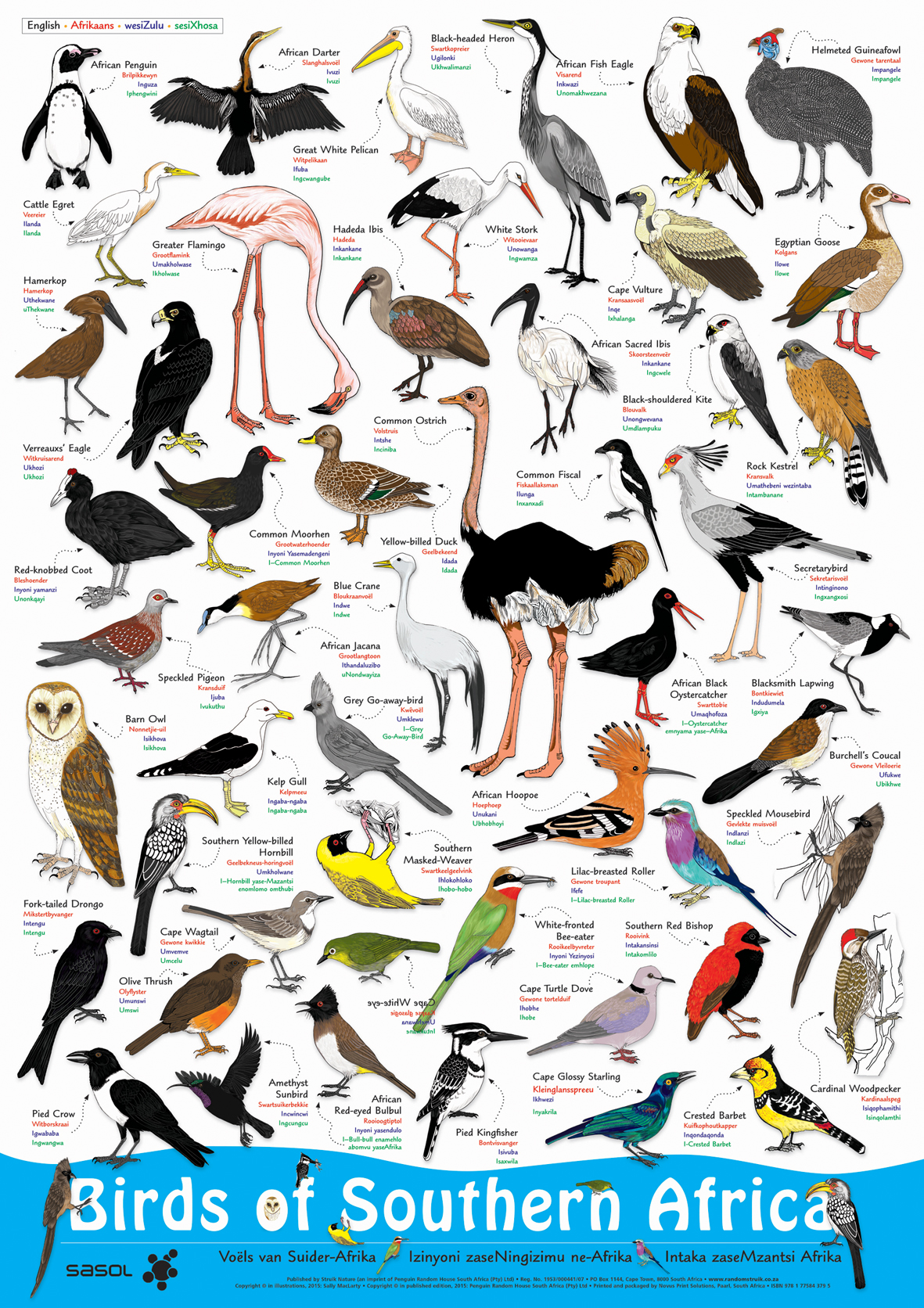 Picture of Birds of Southern Africa