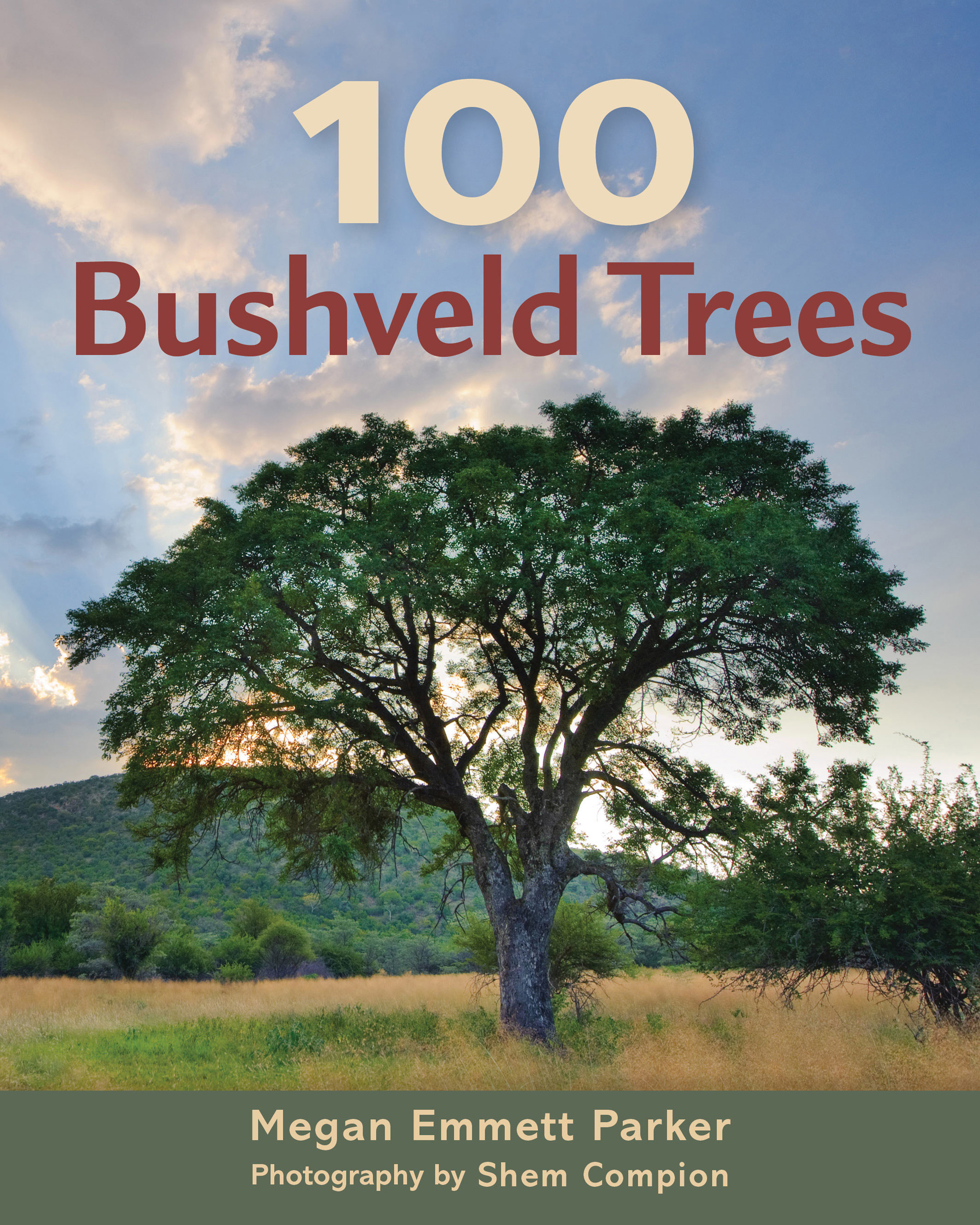 Picture of 100 bushveld trees
