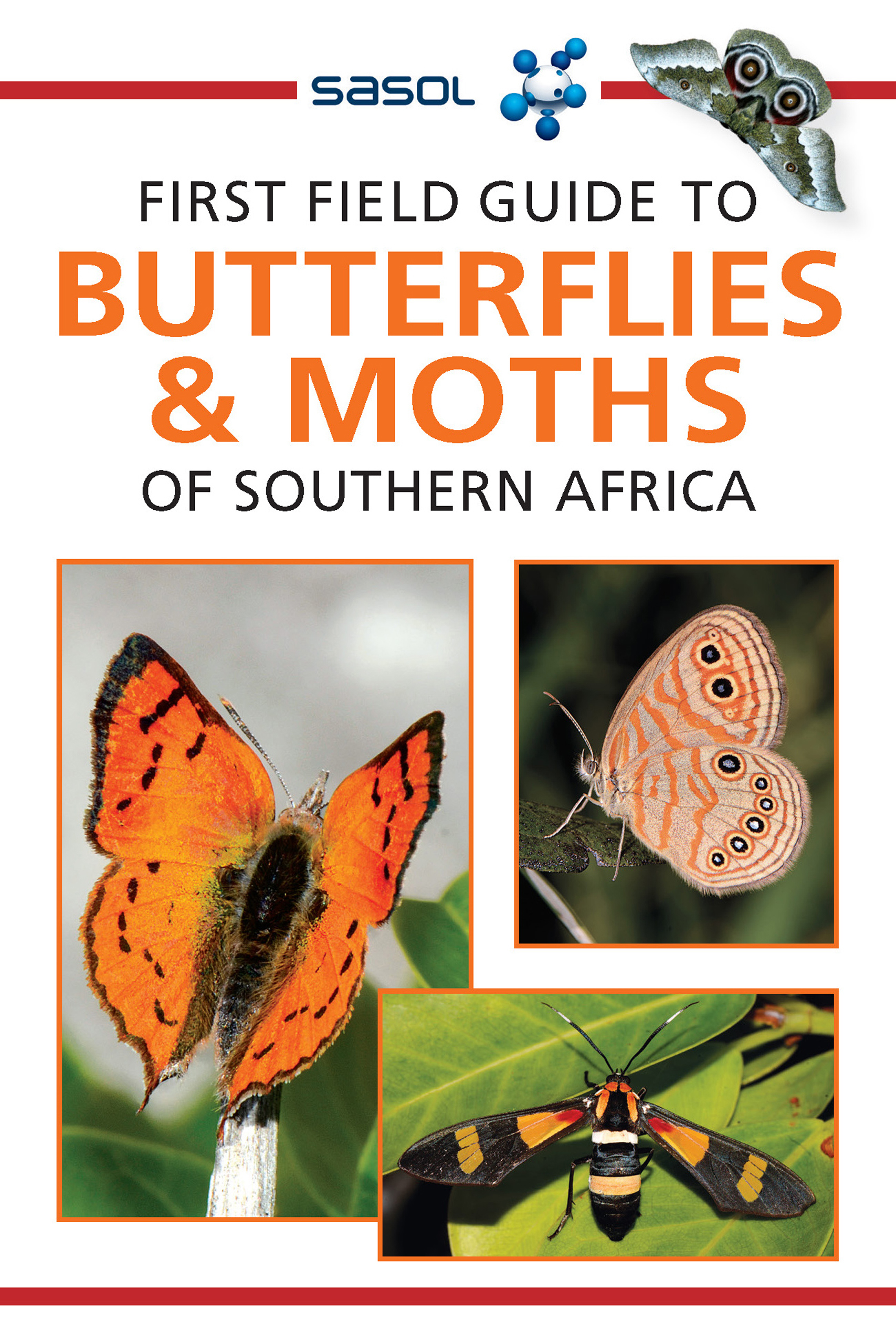 Picture of First Field Guide to Butterflies & Moths of Southern Africa