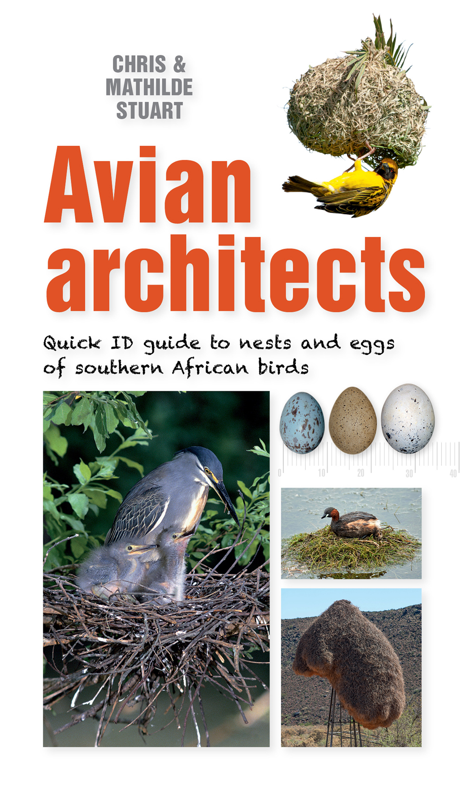 Picture of Avian Architects : Quick ID Guide to Nests and Eggs of Southern African Birds