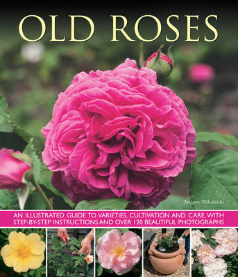 Picture of Old Fashioned Roses