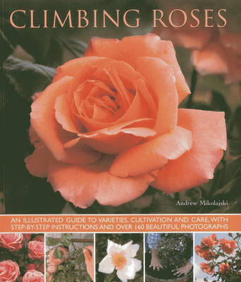 Picture of Climbing Roses