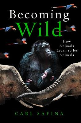 Picture of Becoming Wild : How Animals Learn to be Animals